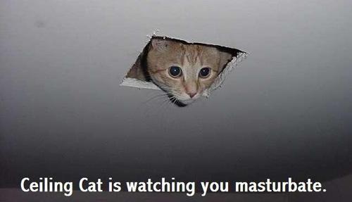 ceiling_cat